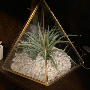 !sale!Decorative faux succulent plant